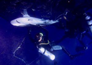 אינטראקציות בין כרישים לחוות לגידול דגים בכלובים בים