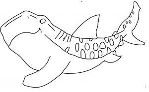 דף צביעה – כריש ליוותני