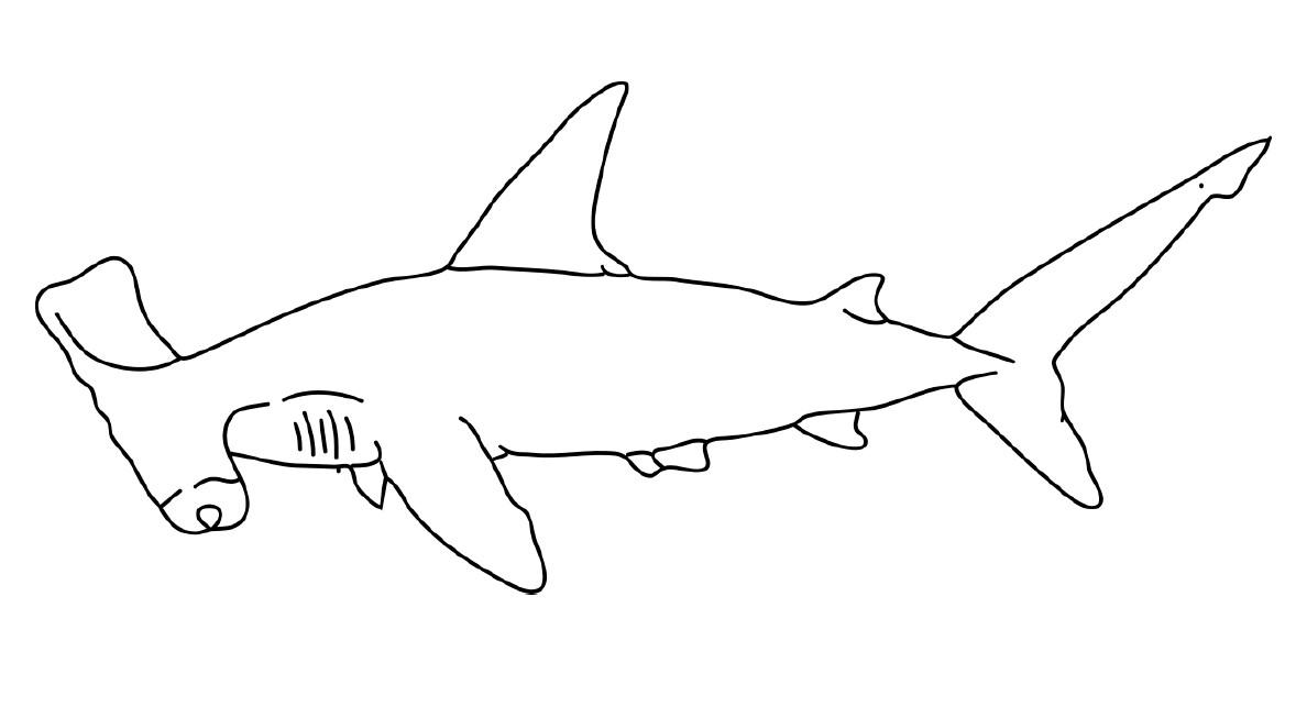 דף צביעה – כריש פטיש