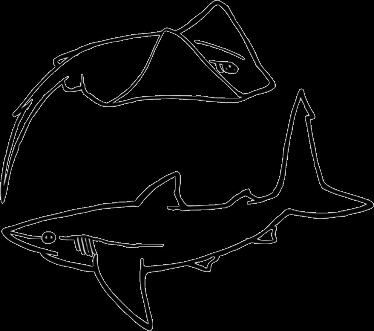 כרישים בישראל