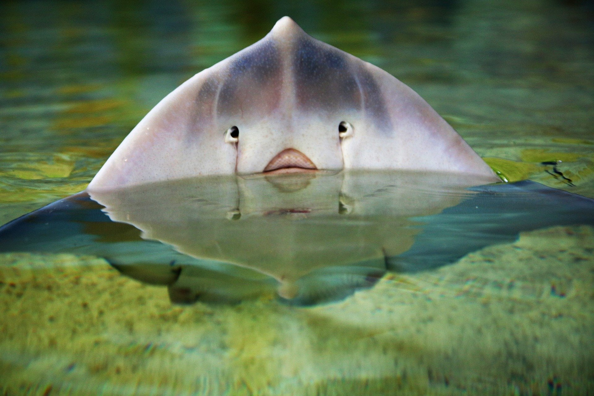 ניסוי שיניים של כרישים ובטאים